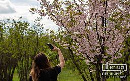 Цветение сакуры и тюльпанов в криворожском ботаническом саду