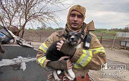 В Софиевке спасатели оказали помощь мужчине, пострадавшему во время пожара