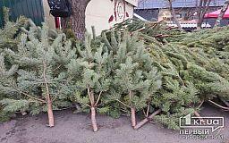 ТОП-5 советов, что делать с елкой после новогодних праздников