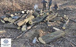 Криворожские патрульные задержали «черных лесорубов»