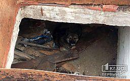 В Кривом Роге пожарные помогли псу выбраться из заброшенного погреба