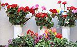Вечная память. В Кривом Роге установлена мемориальная доска герою АТО Александру Игнатову
