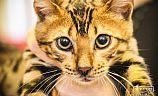 Выставка кошек в Кривом Роге