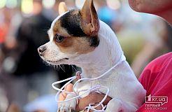 Международная выставка собак в Кривом Роге