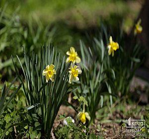 В Кривом Роге расцветают фруктовые деревья и цветы