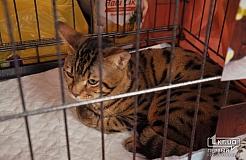 В Кривом Роге состоялась выставка кошек
