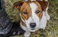 Всеукраинская выставка собак в Кривом Роге