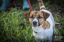 Выставка собак в Кривом Роге