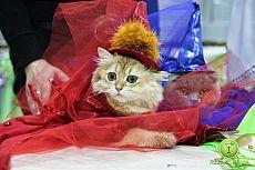 Выставка кошек в ТРЦ