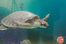 Мир черепах
