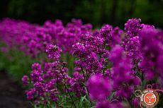Криворожский ботанический сад
