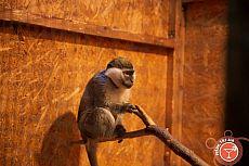 Выставка карликовых обезьянок
