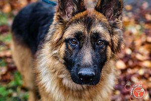 Племенной смотр собак в Кривом Роге