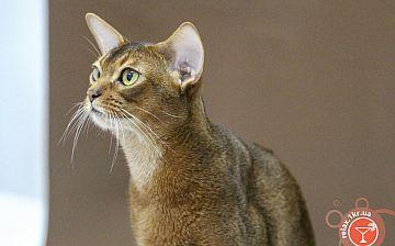 Выставка кошек Кубок Криворожья