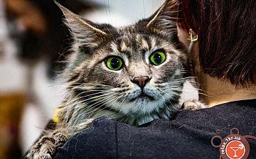 Весенняя выставка кошек в Кривом Роге