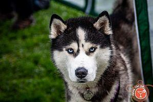 Выставка собак Весна Кривбасса-2021