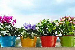 Топ комнатных растений, которые выделяют кислород даже ночью