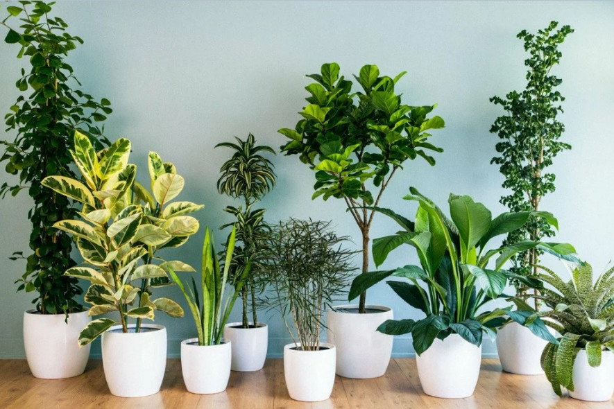 Главные правила весеннего ухода за комнатными растениями