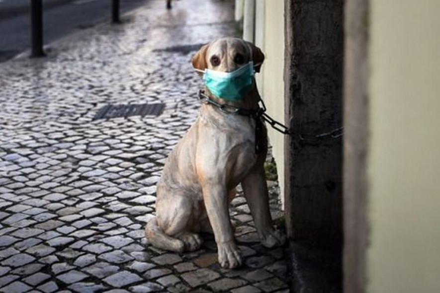 Выкрутились: самые креативные способы выгула животных во время карантина