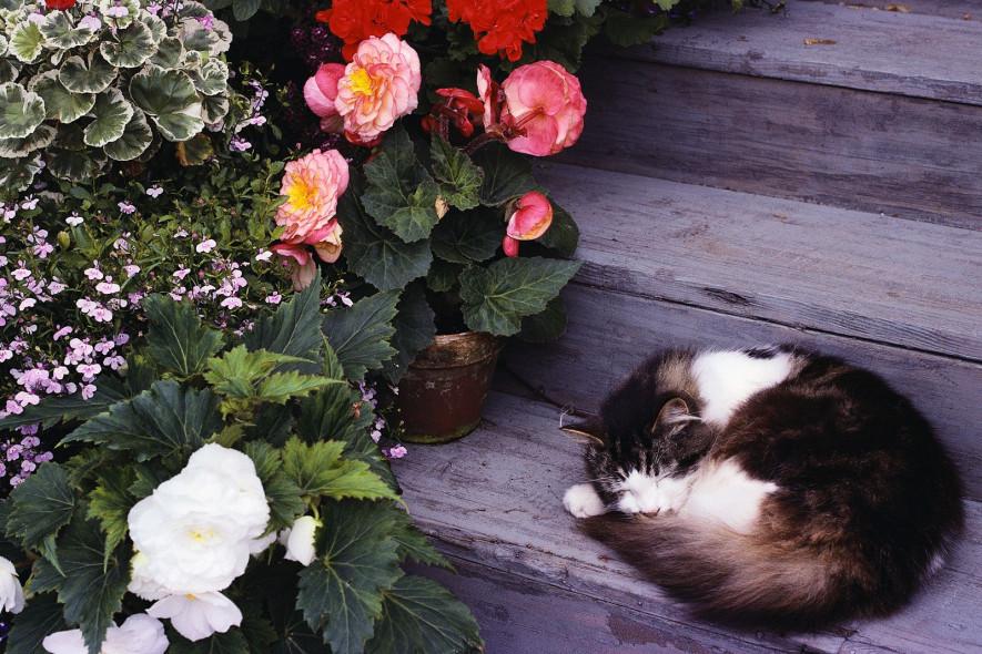 Комнатные цветы и домашние животные: топ-10 растений для безопасного соседства
