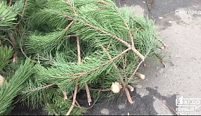 Новогодние елки в Кривом Роге | 1kr.ua