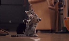 10 милых животных, которые могут тебя убить