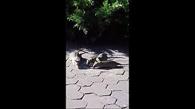 Крысы рулят возле горисполкома!