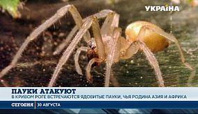 Какие пауки в Украине несут смертельную опасность?