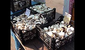 Безпека споживання грибів