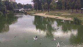 SlowMo of birds in the park (Кривой Рог)