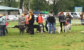 Всеукраїнська виставка собак
