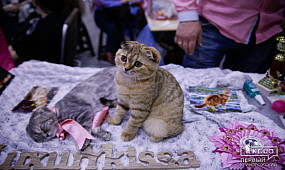Культура Кривой Рог: выставка кошек   1kr.ua