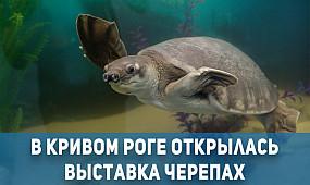 Общество Кривой Рог: выставка черепах | 1kr.ua