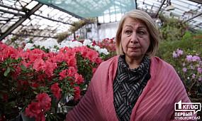 В Криворожском ботаническом саду цветут азалии | 1kr.ua