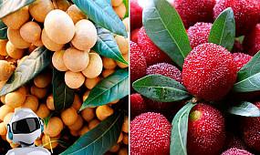 10 фруктов, в существование которых сложно поверить