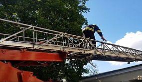 м. Дніпро: рятувальники визволили кошеня з даху