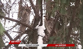 В пригороде Кривого Рога поселились 30 ушастых сов
