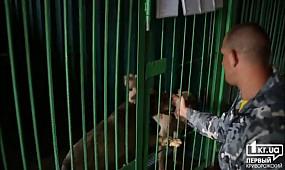 Новости Кривой Рог: Наркотические препараты в Центре обращения с животными не используют   1kr.ua