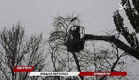 Очередной усатый альпинист: в Кривом Роге спасатели снимали кошку с дерева