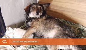 Знущання над твариною