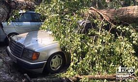 Происшествия Кривой Рог:два тополя во время урагана повредили 11 машин | 1kr.ua