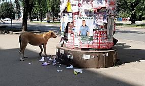 Собака-обрывака