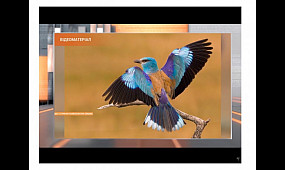 «Синій птах» - у Кривому Розі. Фотограф-анімаліст «піймав» кадр