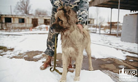 Суспільство Кривий Ріг: Центр поводження з тваринами | 1kr.ua