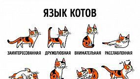 Как найти общий язык со своим котом