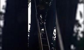 Кривий Ріг: вогнеборці допомогли чоловікові спуститись з дерева