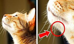 29+ шикарных фактов о котах, чтобы влюбиться в них еще сильнее