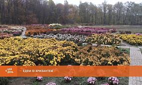 Бал хризантем: у колекції Ботанічного саду - майже сотня сортів осінньої квітки