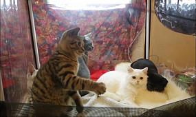 Культура Кривой Рог: Выставка кошек | 1kr.ua