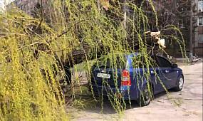 На припаркованную машину упало дерево